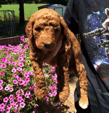 Girl 1 - four weeks.