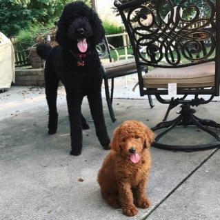 Penelope with her new big sibling - nine weeks.
